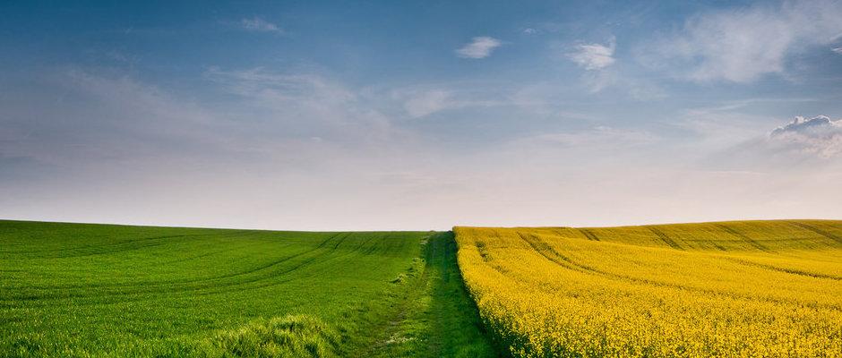Suivi agronomique
